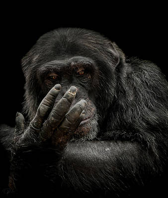 Chimpanzee Photograph - The Palm Reader by Paul Neville