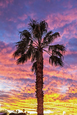 Photograph - The Palm Tree Sunset by Robert Bales