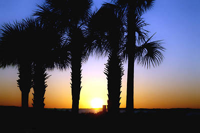 Art Print featuring the photograph The Palms At Sunset by Debra Forand