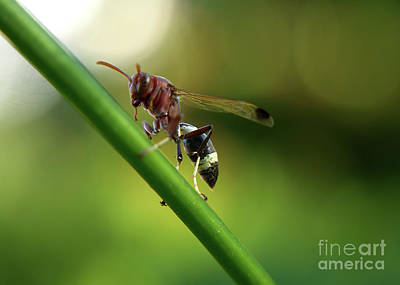 Photograph - The Paper Wasp by Michelle Meenawong