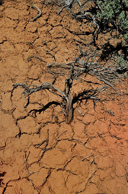 Photograph - The Parched Earth by Ron Cline