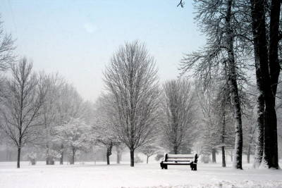 The Park Bench In Winter Print by Kay Novy