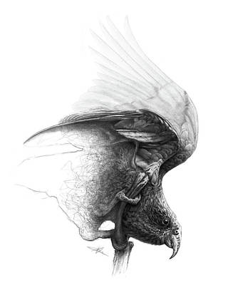 Eyes Detail Drawing - The Parrot by Christian Klute