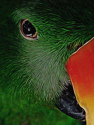 Eclectus Parrot Digital Art - The Parrot Digital Art by Ernie Echols
