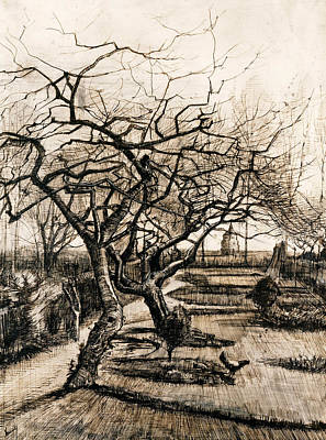 Garden Drawing - The Parsonage Garden At Nuenen In Winter by Vincent van Gogh