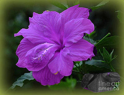 Digital Art - The Passion Of Purple by Rod Jellison