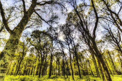 Photograph - The Pastel Trees by David Pyatt