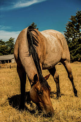 Red Dun Horse Photograph - The Pasture by Laddie Halupa