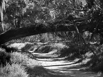 Animals Photos - The Path Before Me, No. 2 by Elie Wolf