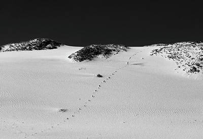 Photograph - The Path - Black And White by David Smith