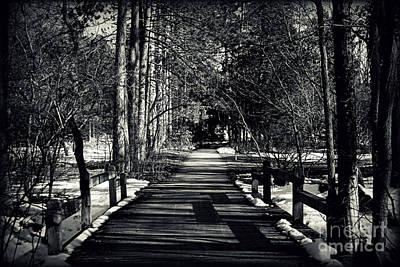 Photograph - The Path by Elizabeth Babler