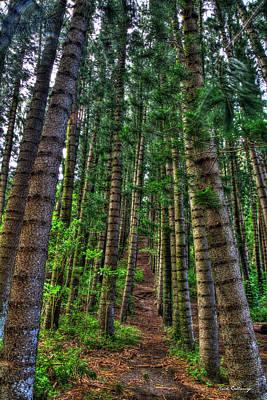 Photograph - The Path Hawaiian Tree Art Ohau Hawaii Art by Reid Callaway