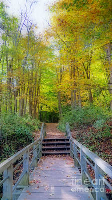 Photograph - The Path Into Autumn Woods by Kay Novy