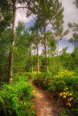 The Path Original by Joann Vitali