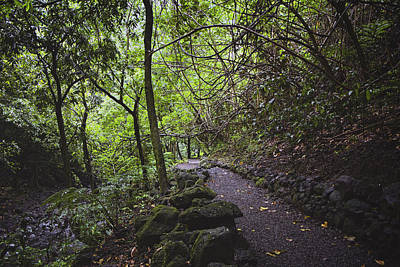 Photograph - The Path Leads Back To You by Lucinda Walter