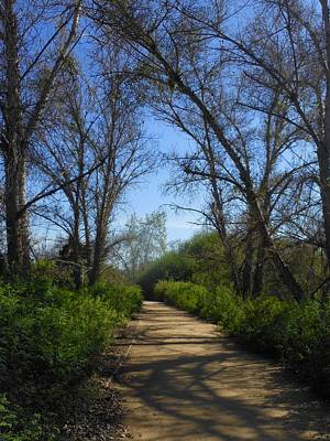 Photograph - The Path Less Traveled by My Lens and Eye - Judy Mullan -