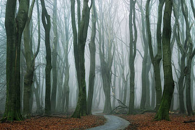Winter Roads Photograph - The Path by Martin Podt