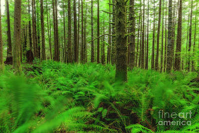 Oregon Photograph - The Path Of Winds by Masako Metz