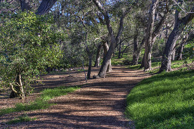 Photograph - The Path by Richard J Cassato