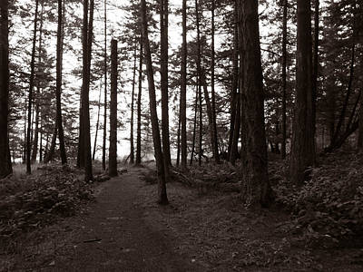 Photograph - The Path Through The Trees by Mark Alan Perry