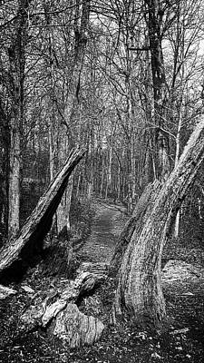 Photograph - The Path Through The Woods Bandw by George Taylor