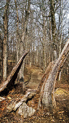 Photograph - The Path Through The Woods by George Taylor