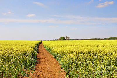 Farm Scene Photograph - The Path To Bosworth Field by John Edwards