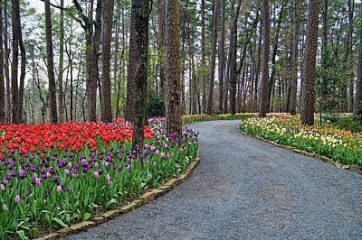Photograph - The Path To Spring by Cricket Hackmann