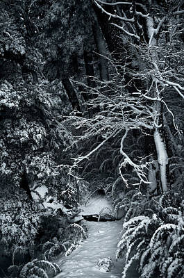 Photograph - The Path To The Frozen Forest In The Argentine Patagonia by Fine Art Photography Prints By Eduardo Accorinti