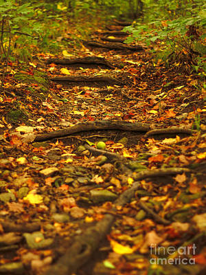 Photograph - The Path  by Viviana  Nadowski