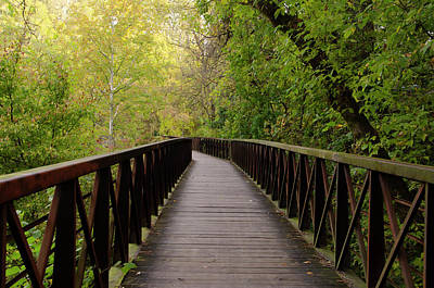 Photograph - The Path We Take by Bill Cannon