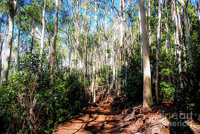 Photograph - The Pathway 407 - Aiea Loop Trail by D Davila