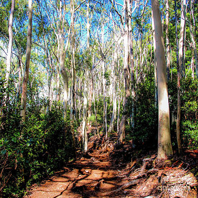 Photograph - The Pathway 407 S - Aiea Loop Trail by D Davila