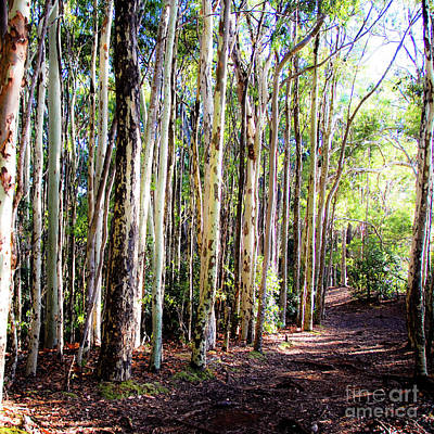 Photograph - The Pathway 409 S - Aiea Loop Trail by D Davila