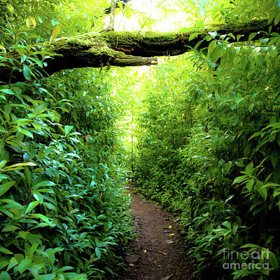 Photograph - The Pathway 564 S - Aiea Loop Trail by D Davila