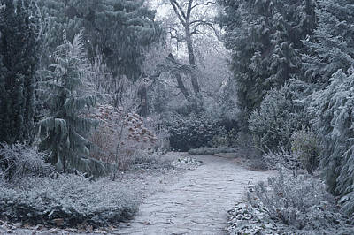 Photograph - The Pathway. Enchanted Winter Garden by Jenny Rainbow