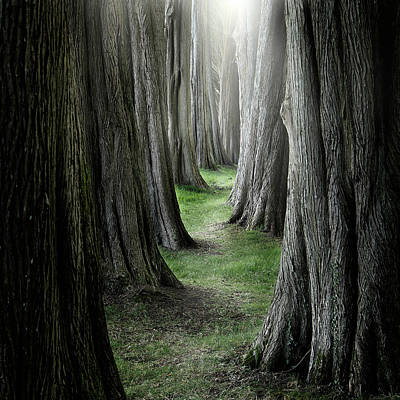 The Pathway Photograph - The Pathway by Ian David Soar