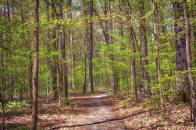 Photograph - The Peaceful Forest by Susan Rissi Tregoning