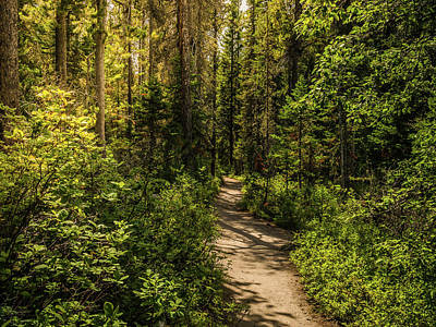 Photograph - The Peaceful Path by Yeates Photography