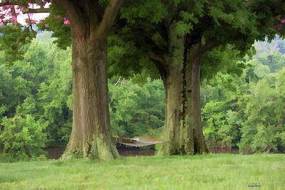 Photograph - The Peaceful Place Hammock Trees by Roberta Byram