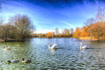 Swan Pair Photograph - The Peaceful Swan Lake by David Pyatt