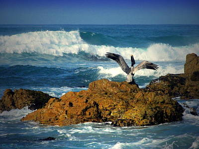 Photograph - The Pelican And The Sea Two by Joyce Dickens