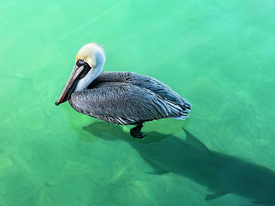 Photograph - The Pelican And The Shark by Kay Brewer