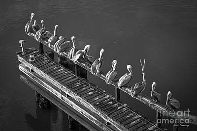 Photograph - The Pelican Grooming Club B W Wildlife Art by Reid Callaway