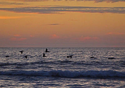 Photograph - The Pelican Patrol by Jacqueline  DiAnne Wasson
