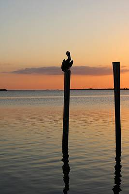 Photograph - The Pelican's Perch by Michiale Schneider