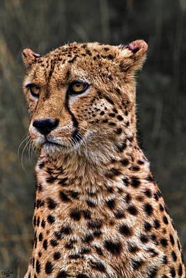 Cheetah Digital Art - The Pensive Cheetah by Chris Lord