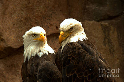 Photograph - The Pensive Pair by Adam Jewell