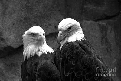 Photograph - The Pensive Pair Black And White by Adam Jewell