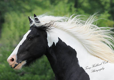 The Perfect Stallion  Art Print by Terry Kirkland Cook